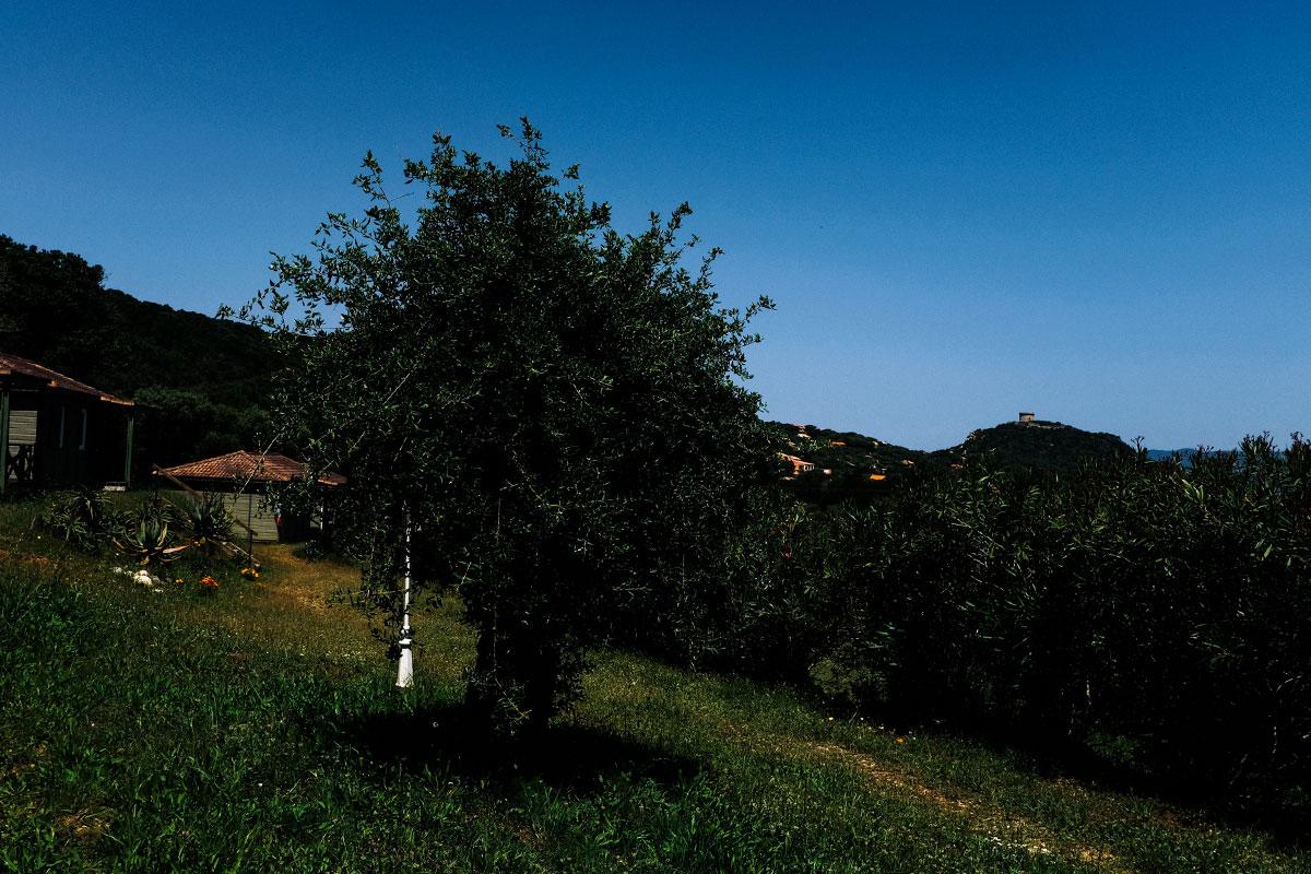 les jardins des bungalows avec vue sur la tour